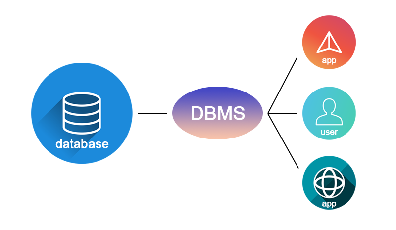 A DBMS stands between the users and the database.